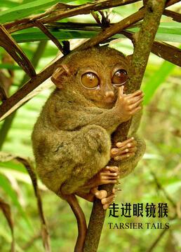 走进眼镜猴剧照
