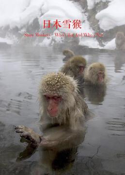 日本雪猴剧照