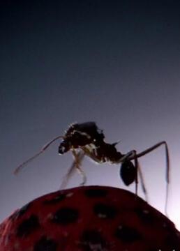 蚂蚁国大自然的秘密强邦剧照