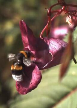 大黄蜂的秘密剧照