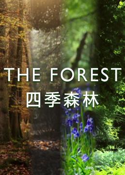四季森林剧照