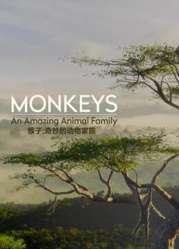 猴子奇妙的动物家族剧照