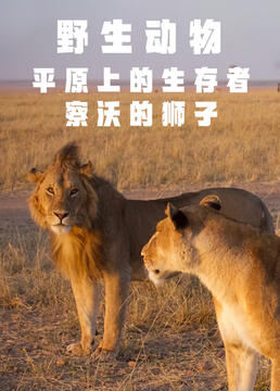 野生动物平原上的生存者察沃的狮子剧照
