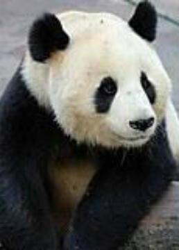 大熊猫在英国剧照