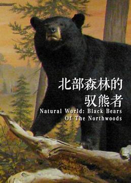 诺斯伍兹与熊同行剧照