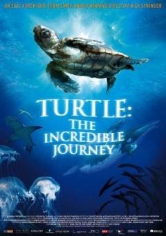 海龟奇妙之旅剧照