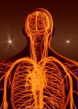 再造人类生命的神奇细胞剧照