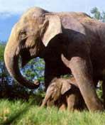 亚洲象的家园剧照
