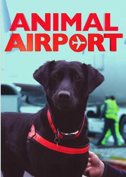 机场动物秀第二季剧照
