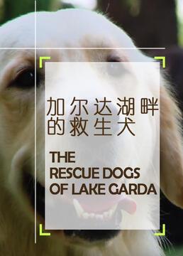 加尔达湖畔的救生犬剧照