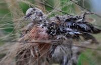 鸟之殇,千年鸟道上的大屠杀剧照
